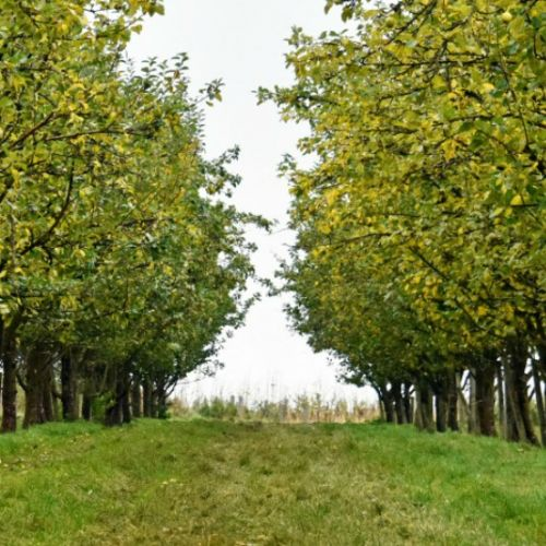 Longueville Orchards